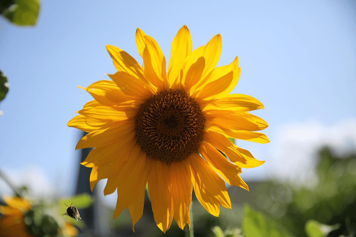 multiwatt Frühlingsaktion – Bekanntgabe der Gewinner